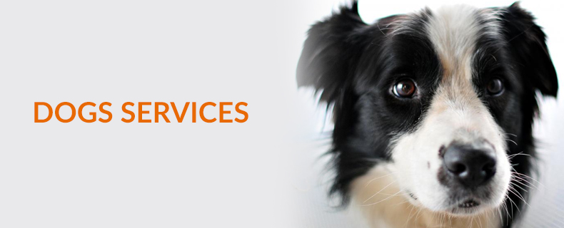 dog-services